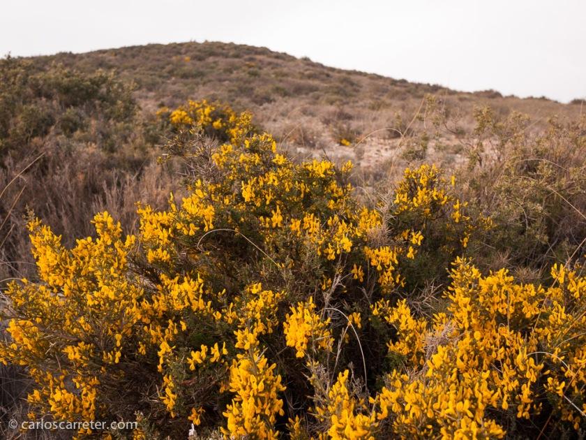 Apenas un pequeñas y escasas flores ponen un poco de color en los áridos montes cerca de Rodén.