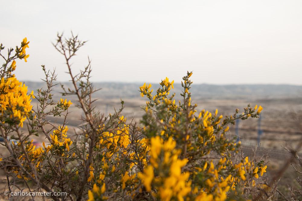 Y la vegetación acompañante es resistente a la carencia de humedad de la zona a pesar de que tampoco nos separan tantos kilómetros del río Ebro.