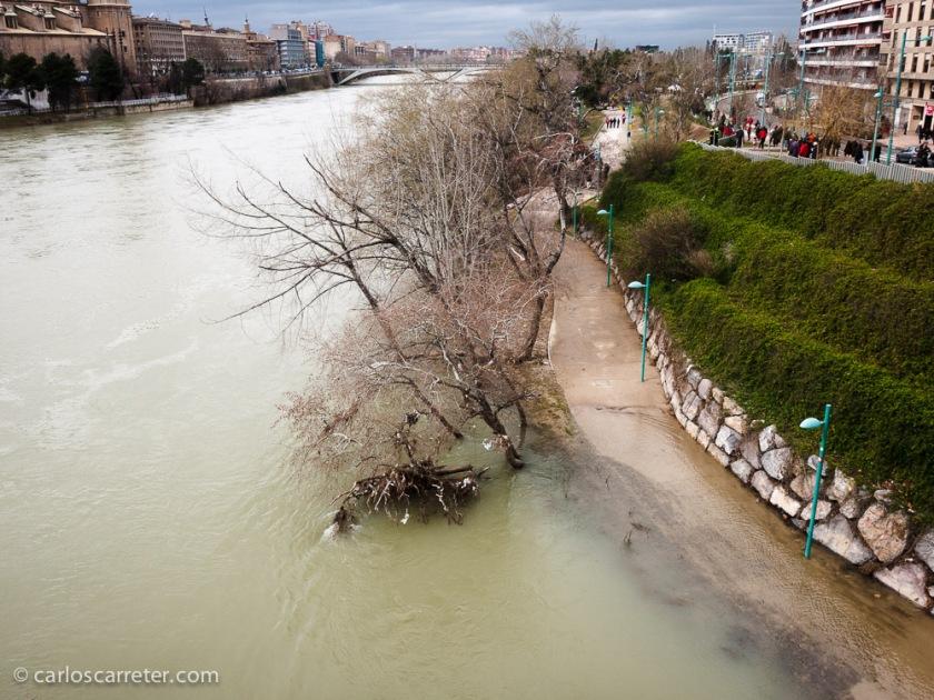 En la Cincomarzada, también ha sido la arboleda de Macanaz el centro de actividades, ligeramente amenazada por el agua, tanto de la crecida del Ebro, como de la lluvia.