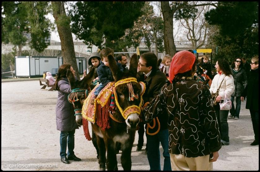 Paseos en burro para los niños en la arboleda de Macanaz.
