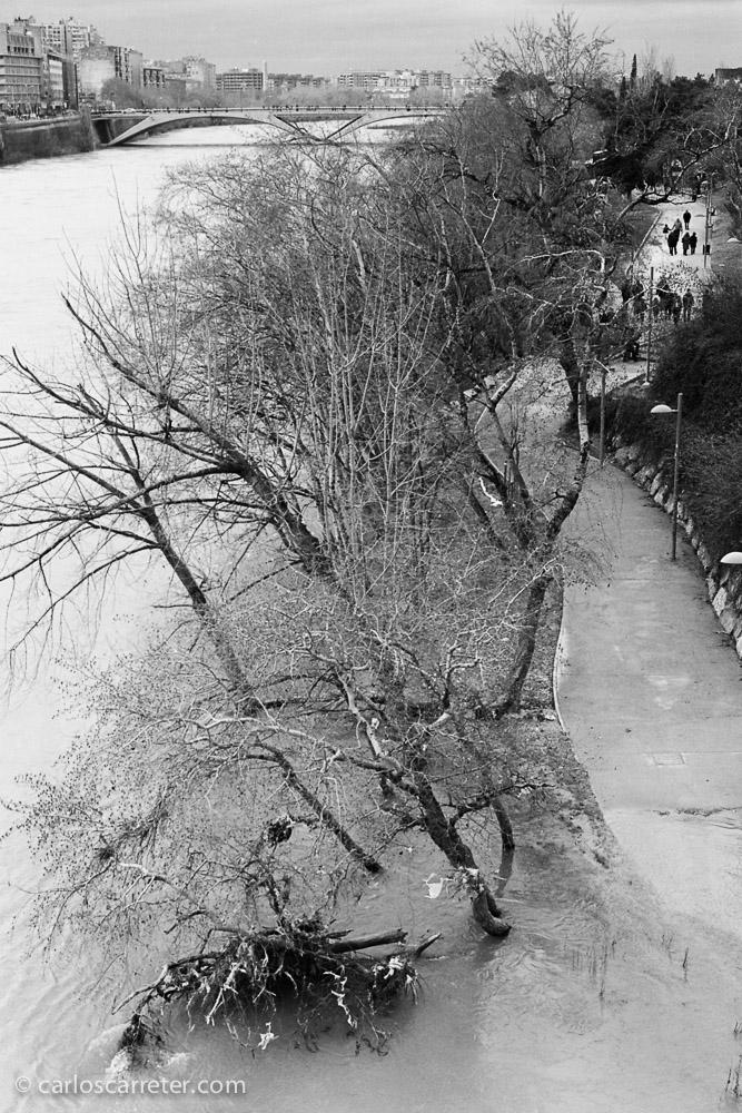 El Ebro desbordándose ligeramente bajo el puente de Piedra.