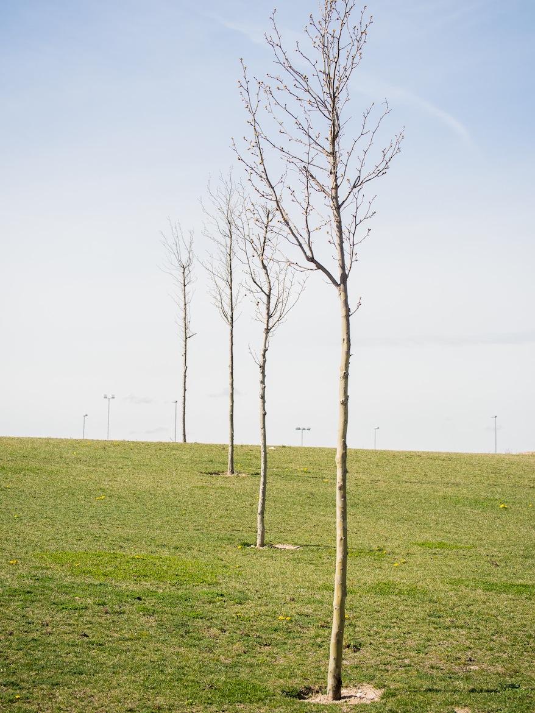 No digamos ya los esqueléticos árbolillos, poco más que estacas con alguna rama, que se encuentran dispersos por la extensión del parque.