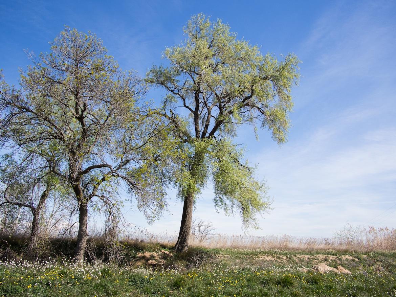 Y eventualmente encontramos una diversidad de árboles que flanquean el curso del canal, invisible de otra forma.