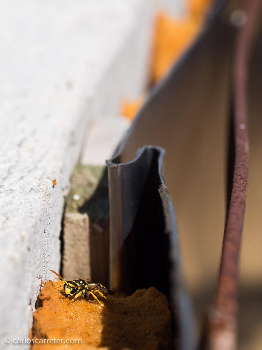 Algunos tenían miedo de un nido de avispas que encontramos en la atalaya de uno de los laberintos del parque; pero ya hemos visto en el texto que animales más peligrosos hay por el mundo,... bípedos.