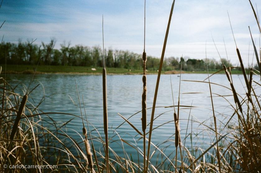 Junto al estanque.