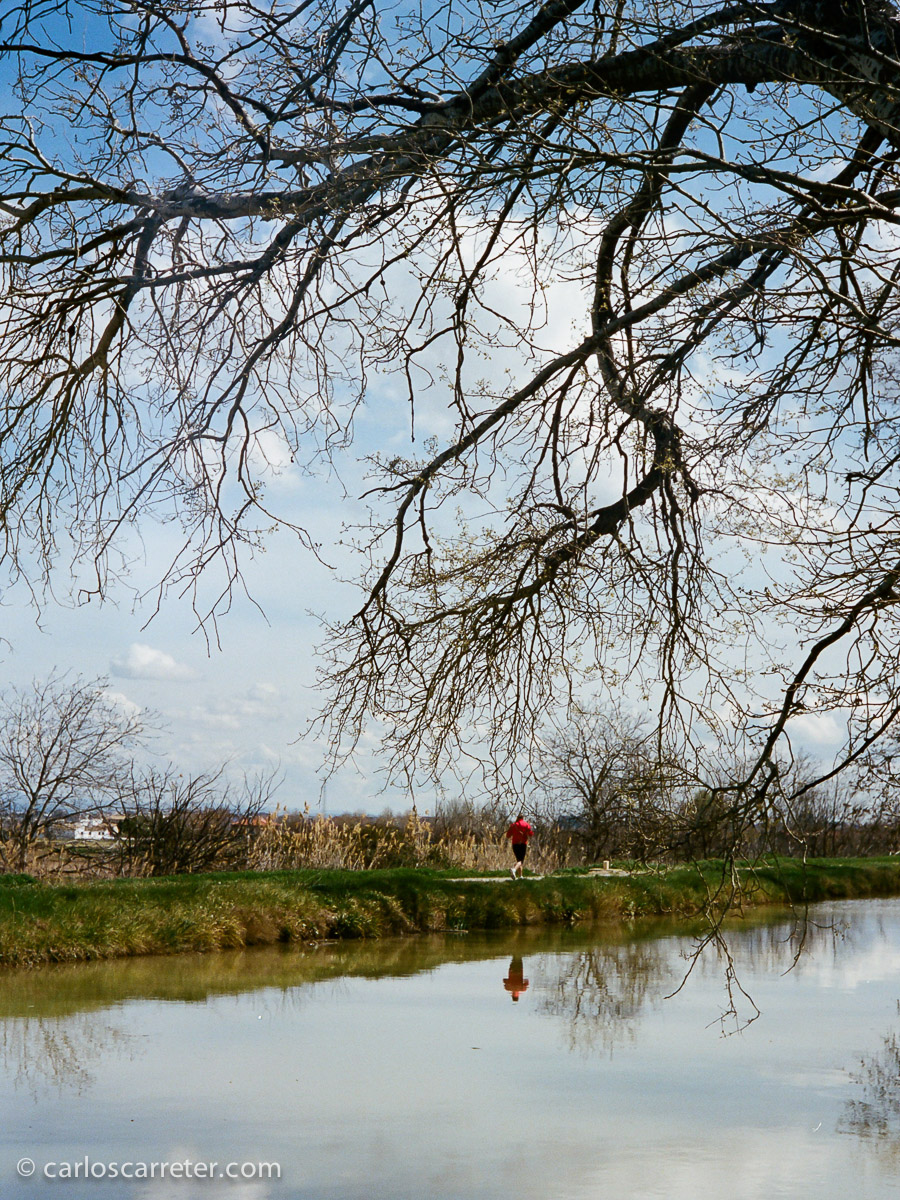 Paseo junto al Canal Imperial de Aragón.