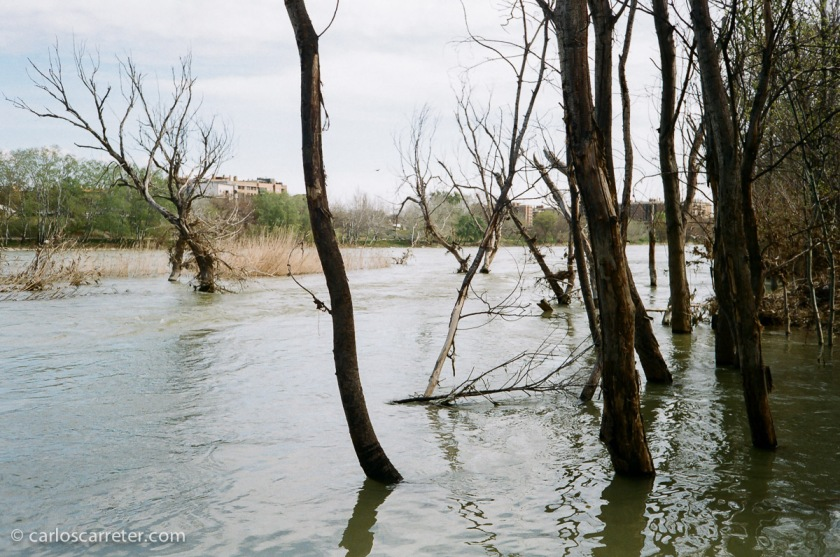 El Ebro baja todavía relativamente alto, debido a las frecuentes lluvias del mes de marzo y al progresivo deshielo de las nieves del Pirineo.