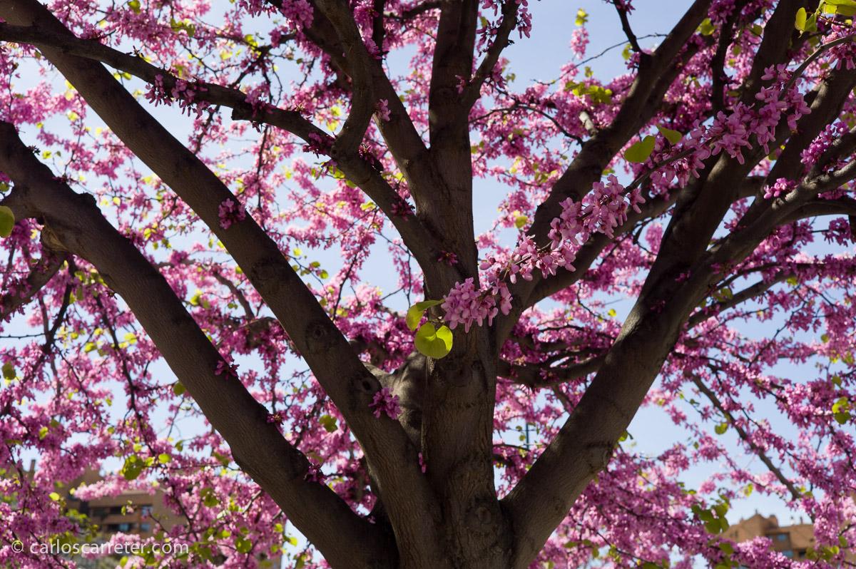 """Es primavera, y se nota en el arbolado urbano; a uno de los dos """"floreros"""" de la película, el potencialmente más interesante, y absolutamente desaprovechado, no le gustan las flores. Qué cosas."""