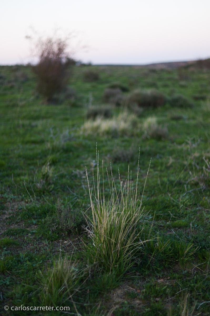 Bonitos paisajes al atardecer, con los personajes dando vueltas, saltos y bailando, cuando son felices, o paseando cabizbajos, cuando se siente miserables. Esta llanura al atardecer, cerca de Montalbán, provincia de Teruel.
