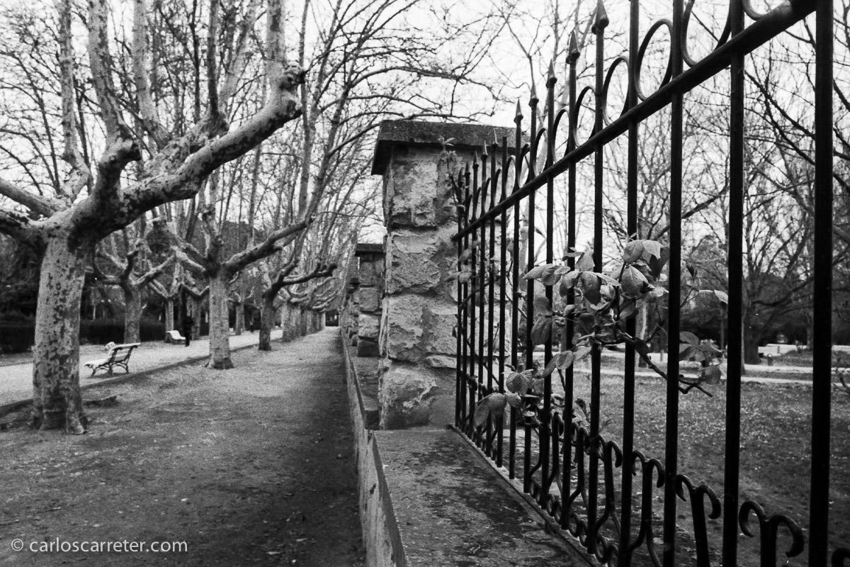 Con la Leica IIIf usé un carrete de Ilford HP5 Plus para probar las ventajas e inconvenientes del revelado desatendido con Rodinal; para ello salí a pasear por el Parque Grande.