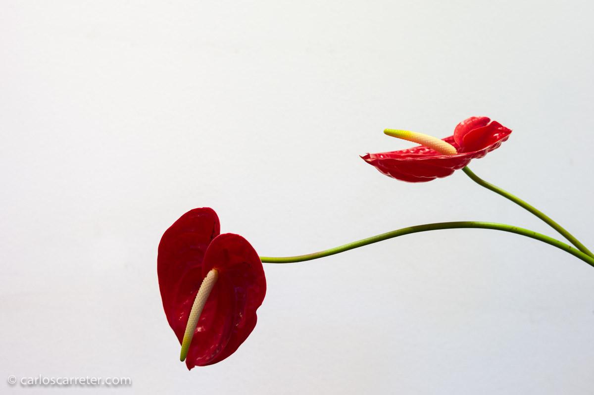 Mayo - Arreglos florales japoneses en el Parque Grandes; símbolo de un deseo de viajar que todavía no se ha satisfecho.