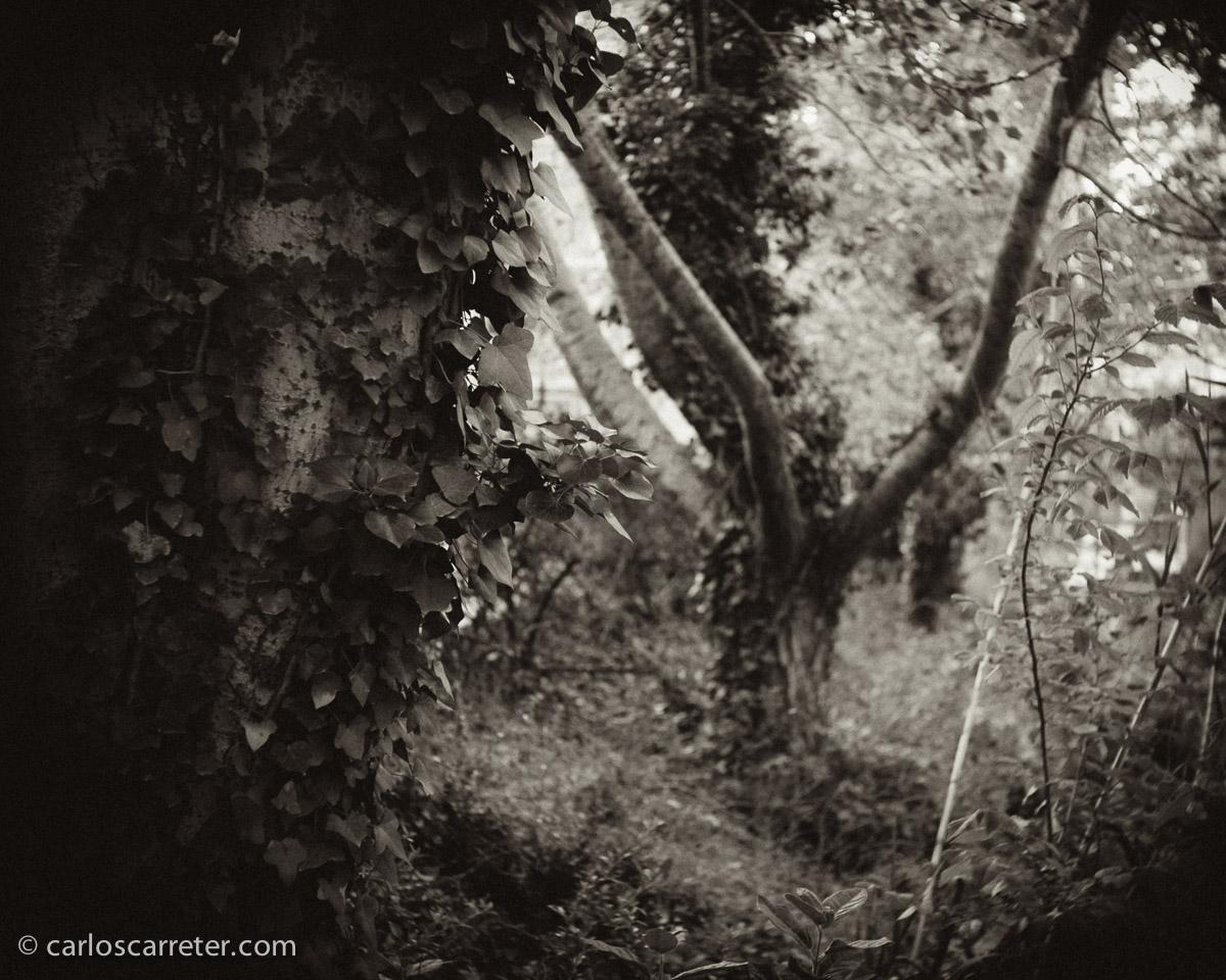 Entre los árboles.