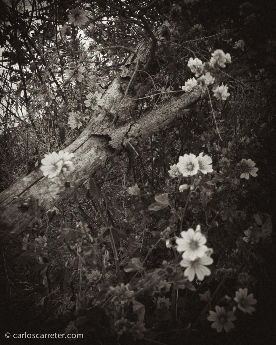 Entre las flores.