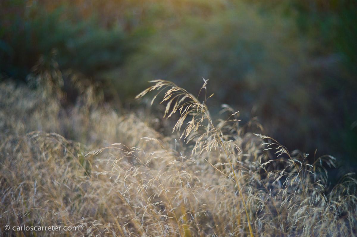 Octubre - Mes de tranquilidad y de paisajes serenos.