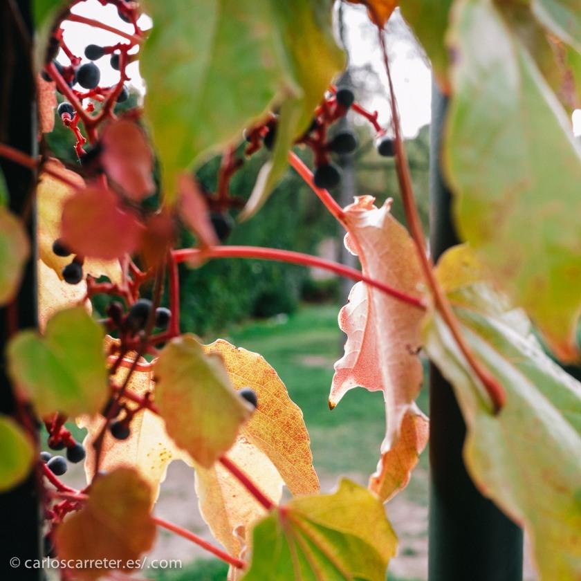 Ambiente otoñal, para una entrada en el que el personaje más destacado es una mujer en el otoño de su vida.