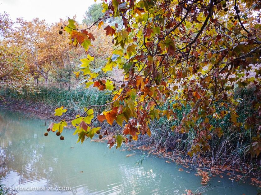 Hojas de tonos ocres sobre las remansadas aguas de los ríos y canales.