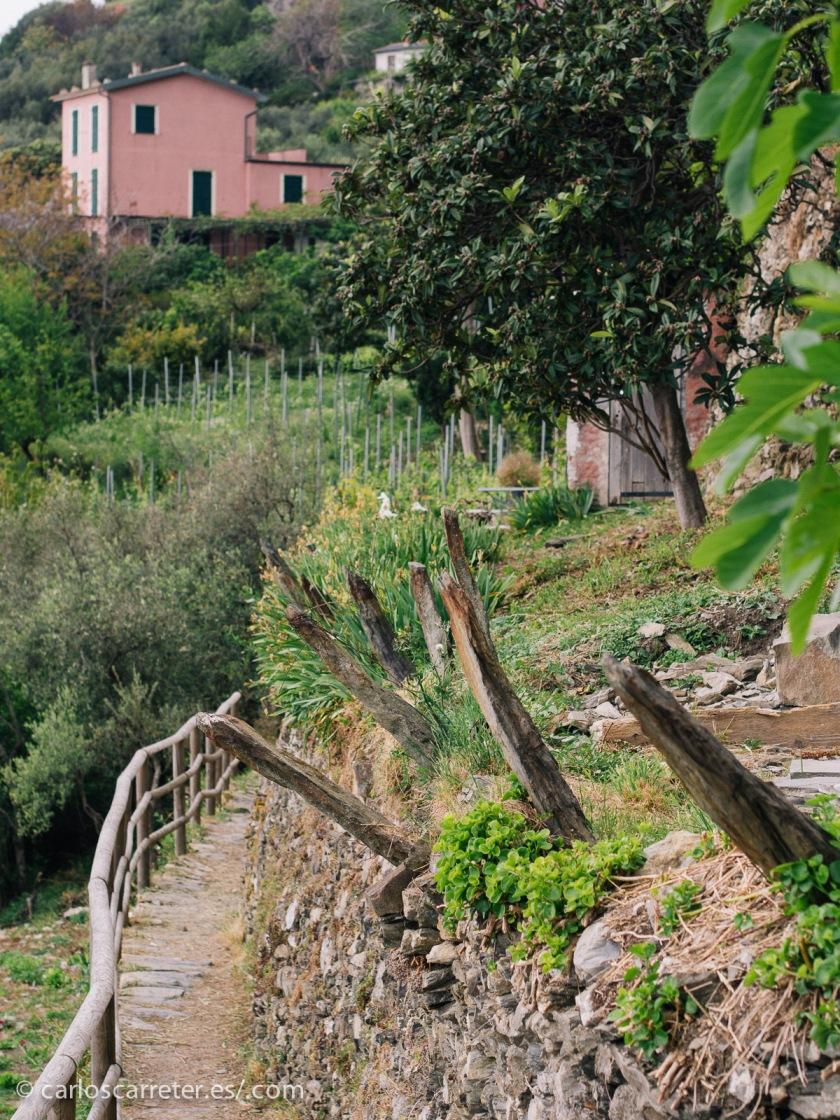 """Entre """"mis defectos"""" está el de no haber recorrido adecuadamente la Provenza y la costa mediterránea francesa; lo más parecido que tengo en fotos son los paisajes de la Riviera de Levante en  Liguria, Italia."""