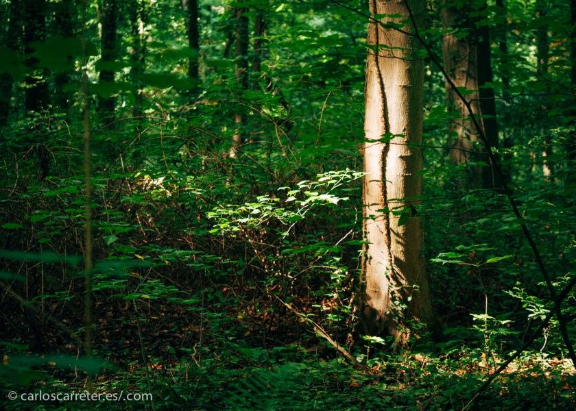 Los bosques, los campos y las poblaciones alemanas presentaron una intensa resistencia a la invasión aliada, por lo menos en un principio; aunque la lucha fue mucho peor en el frente oriental. En la foto, el bosque del palacio de Augustusburg, cerca de Colonia.