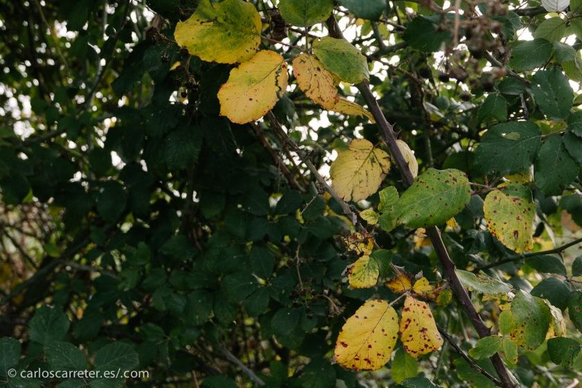Nuevamente, algunas de las últimas fotografías de 2014; nuevamente el soto de Cantalobos y alrededores, pero con un aspecto más natural.