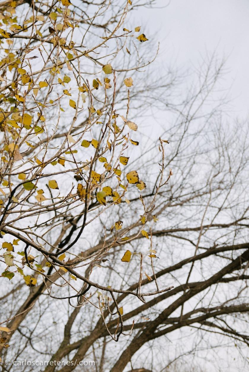 Un invierno que tiene todavía toques de otoño, porque no ha habido grandes fríos este año. Al menos todavía.