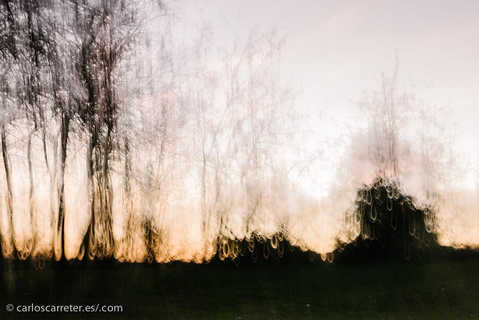 Un estado de ánimo al que le vienen que ni pintadas estas crepusculares vistas, un tanto impresionistas, del bosque de ribera de Cantalobos.