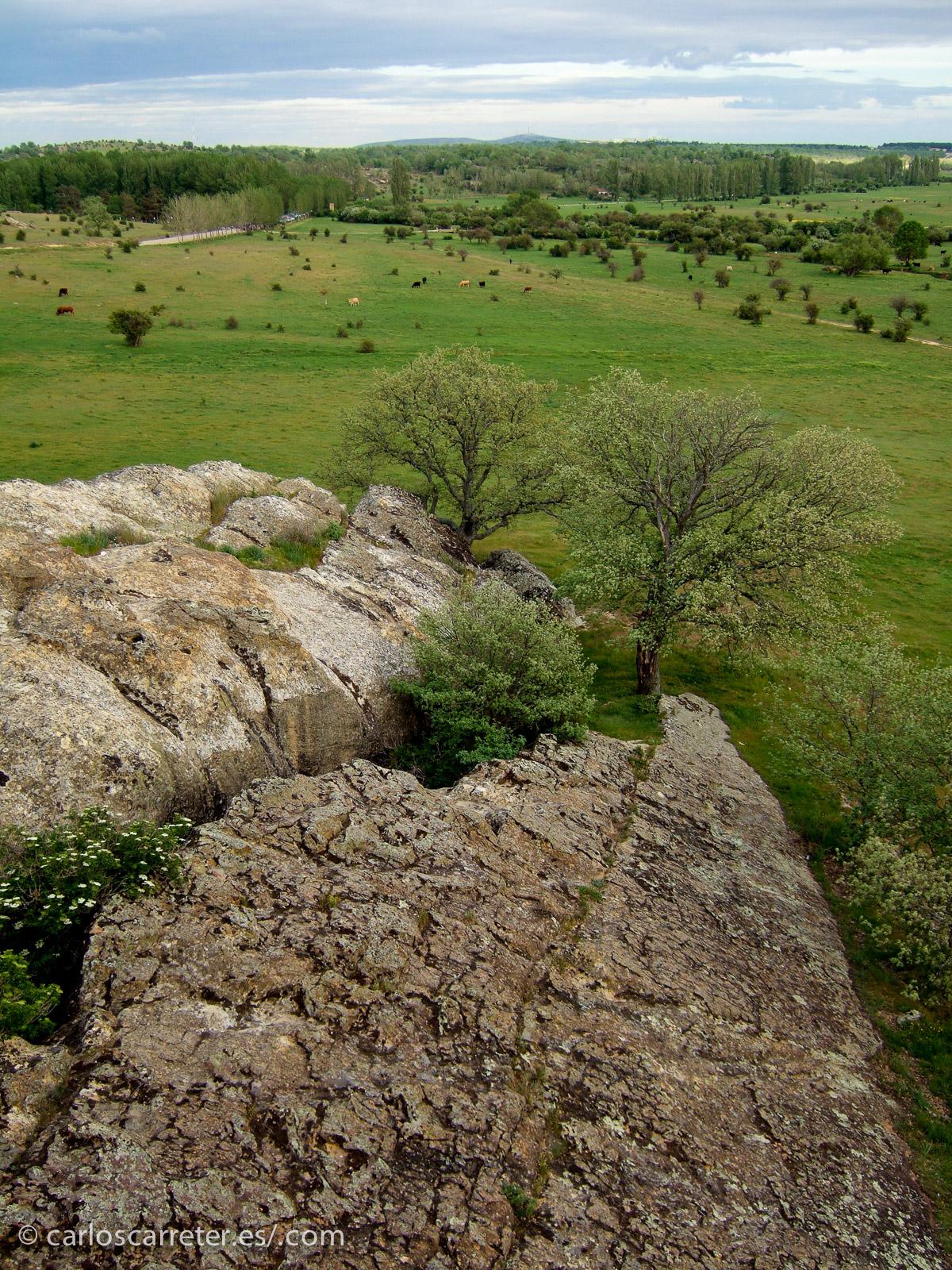 Dehesa de Valonsadero, Soria, mayo de 2006.