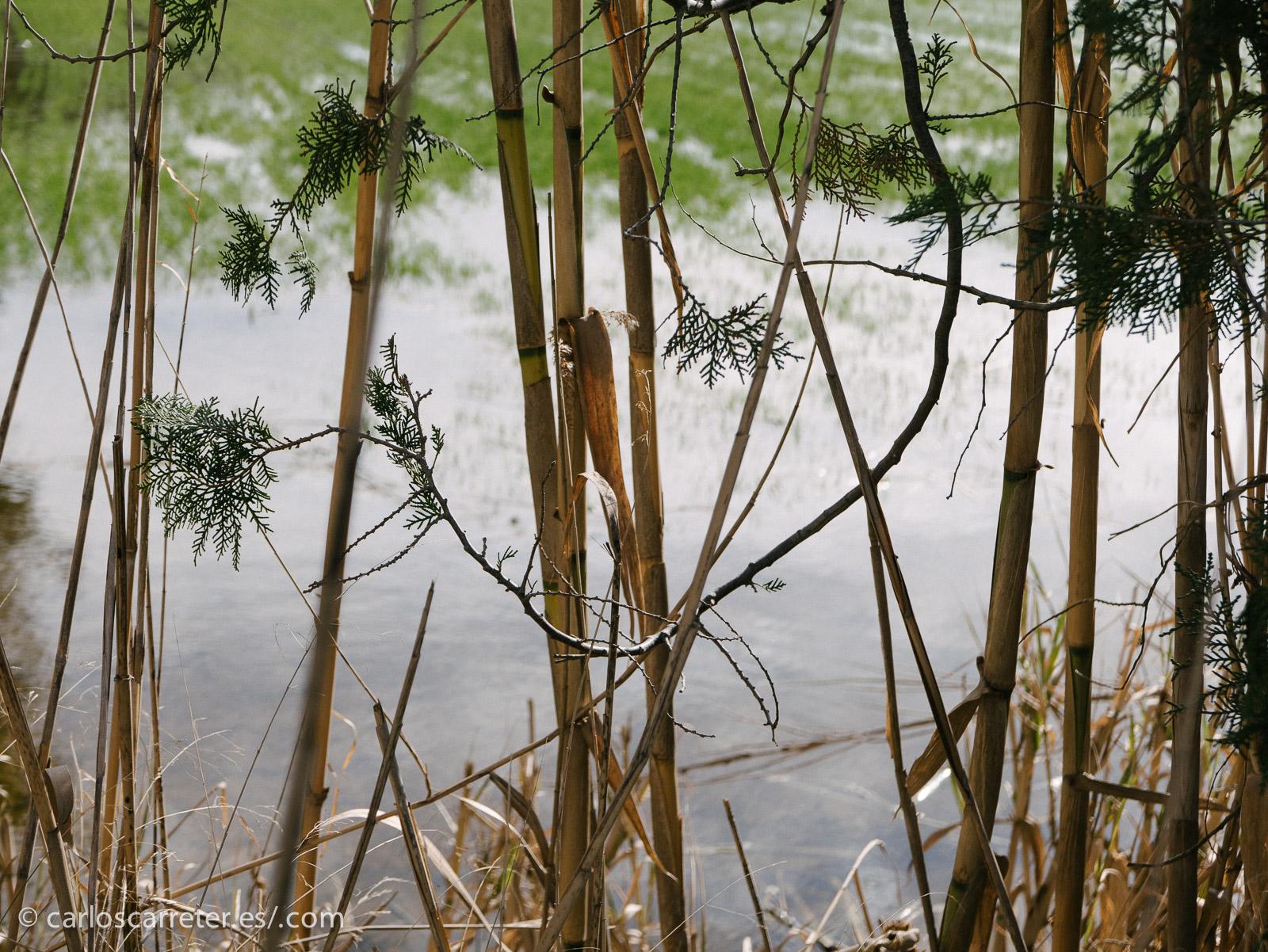 Después nos hemos dirigido a los galachos. A poco de salir del jardín, hemos empezado a encontrar algunos campos parcialmente inundados.