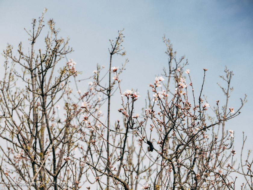 Ya de vuelta, hemos comprobado que la primavera está anunciando ya su llegada en estas latitudes.