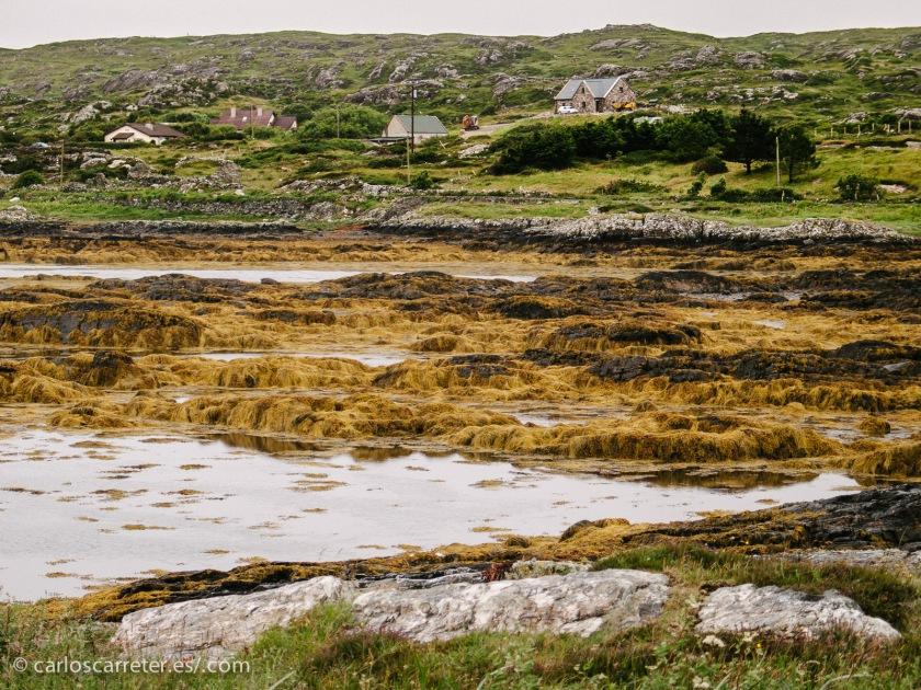 Finalmente bordearemos la costa por la bahía de Galway, para ir a tomar a unas pintas a la ciudad que le da nombre.