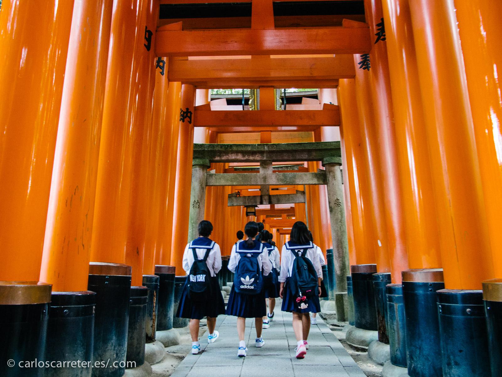 Luego nos trasladaremos a Kioto, donde tal vez nos topemos con Yumiko y su madre mientras pasean por las innumerables torii de Fushimi Inari Taisha.