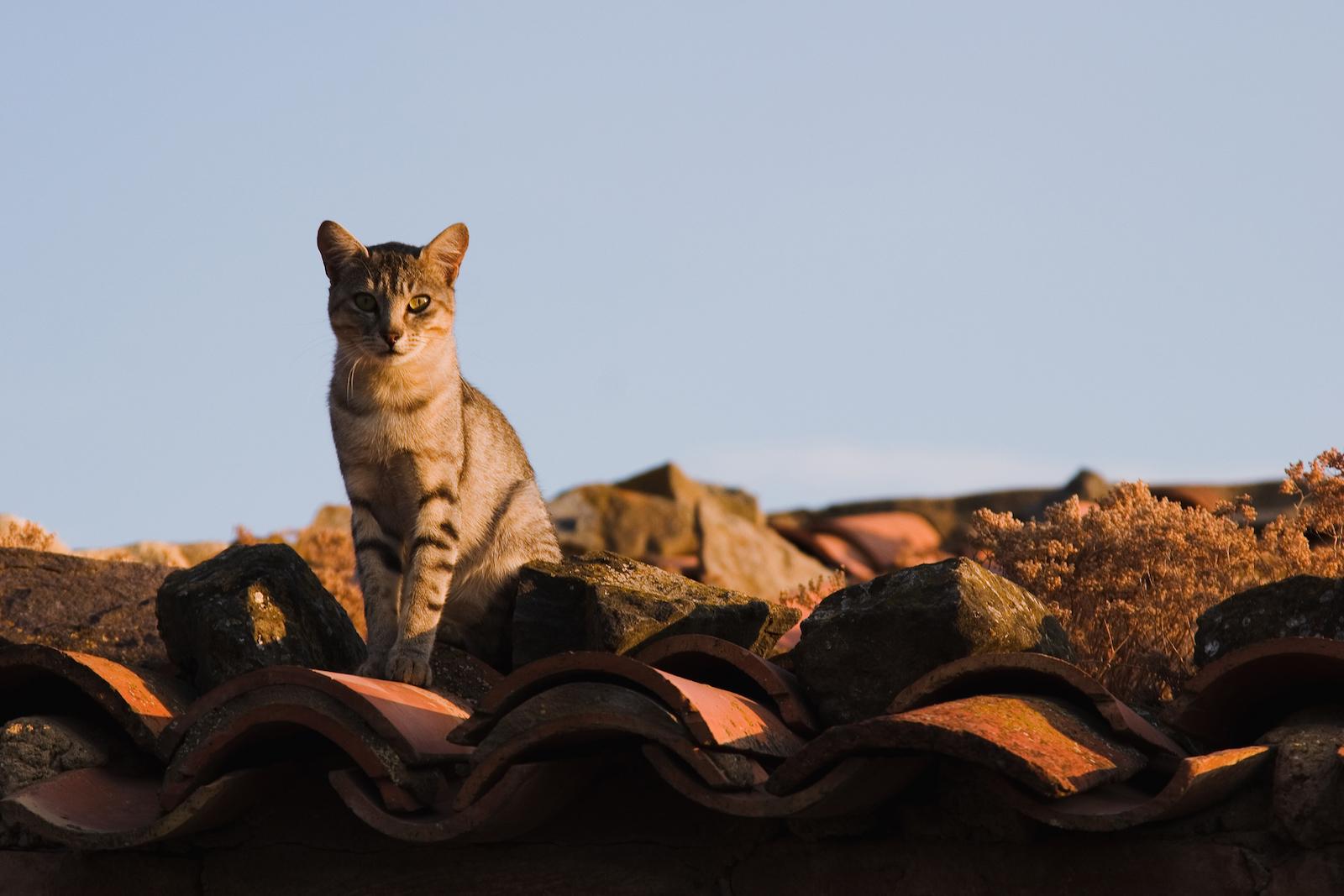 Si el gato que encabeza la entrada lo podemos encontrar en la calle de las Armas de Zaragoza, este se encontraba por los tejados de Añón de Moncayo.