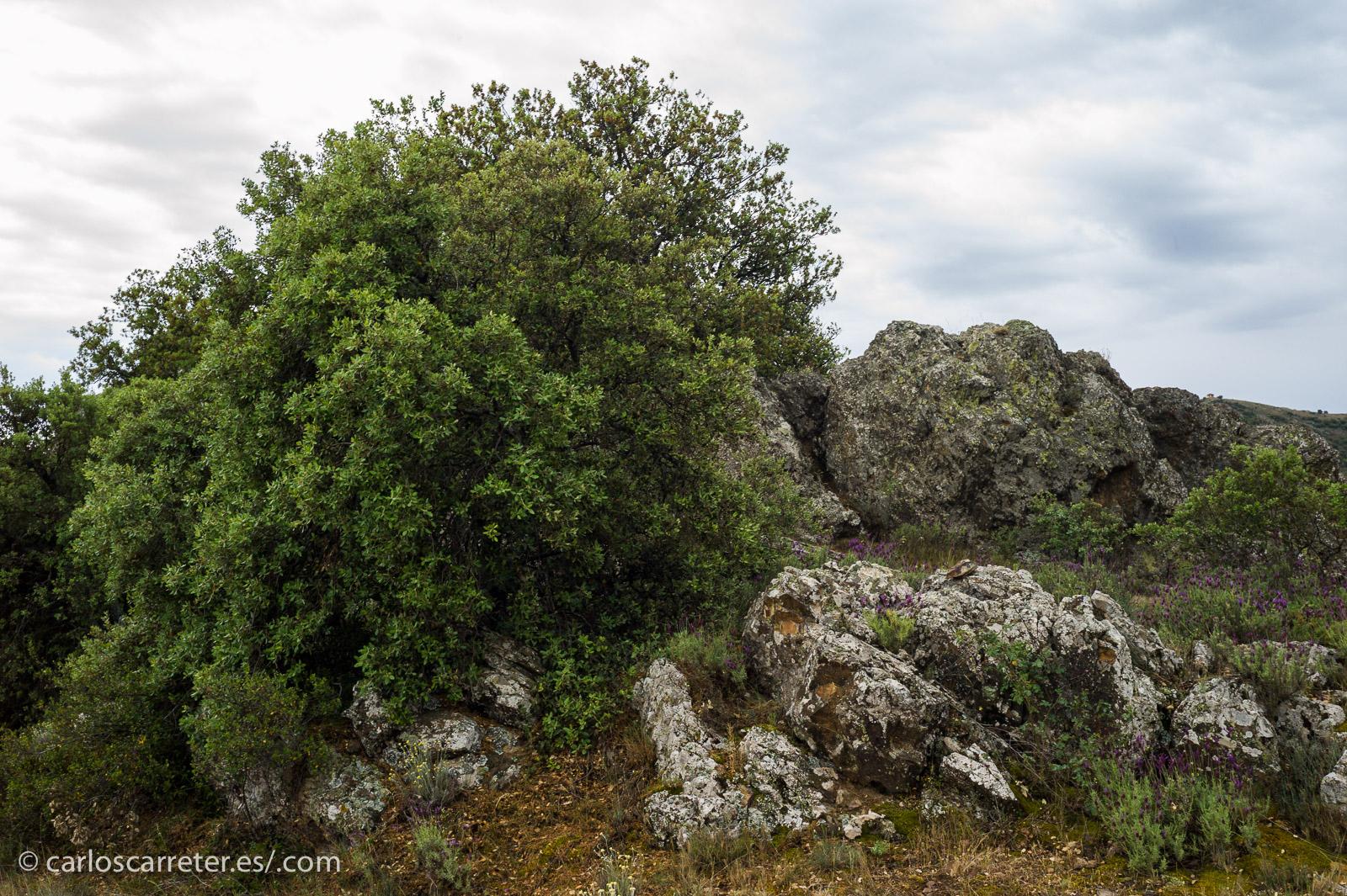 En principio, el planeta Tierra es bastante acogedor dentro de lo que cabe; y no le falta belleza como en estas vistas de la sierra de Algairén, Aragón (España).