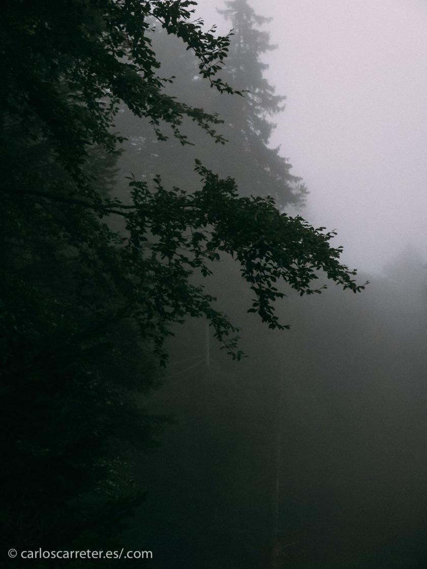 Bosques densos, en la niebla, en los que las casquibanas caperucitas modernas se pierde, encontrándose con feroces lobos con máscaras, cuchillos y malvadas intenciones...