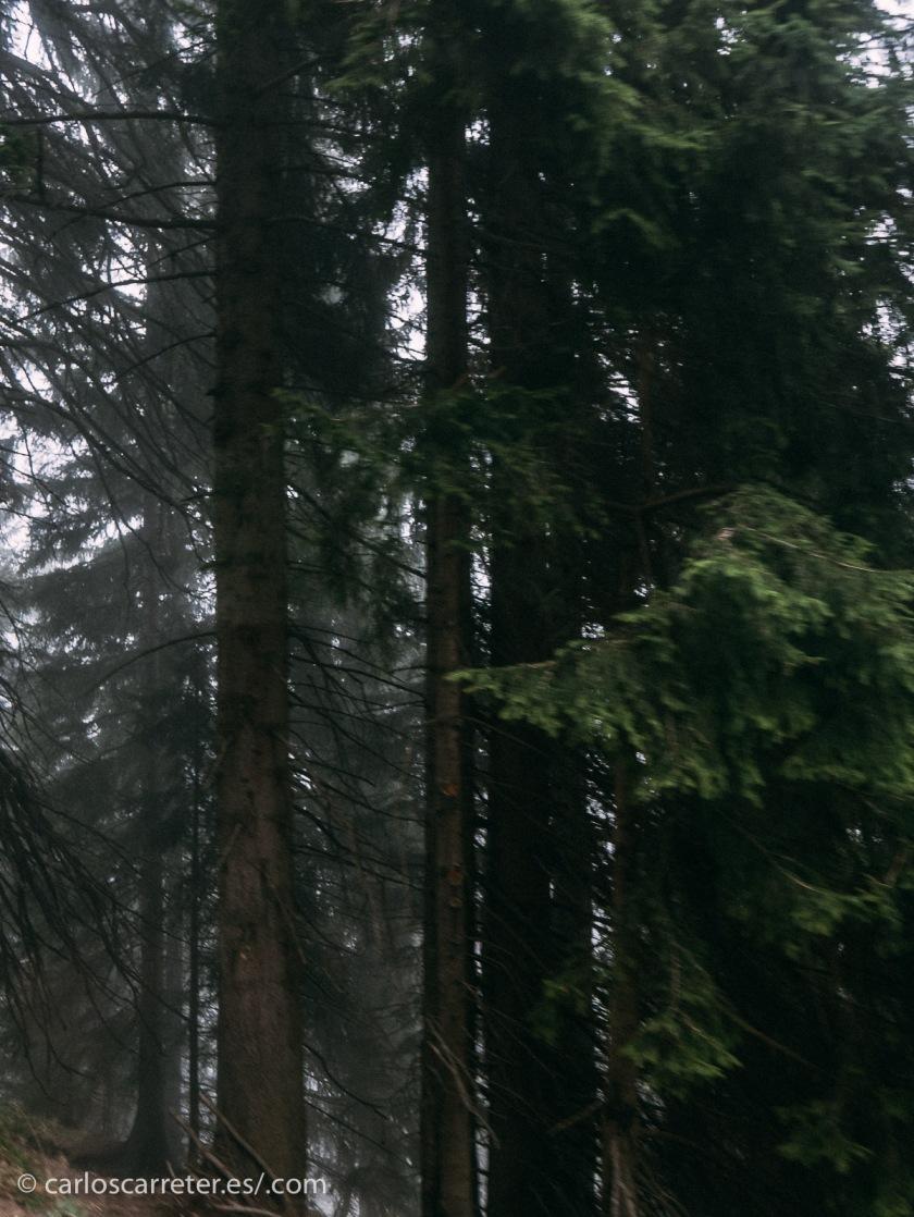 """Bueno... en realidad son los bonitos bosques de las laderas del monte Pilatus cerca de Lucerna en Suiza... donde dicen que está enterrado el """"malvado"""" Poncio Pilatos y... ya volvemos con los cuentos de viejas de terror."""