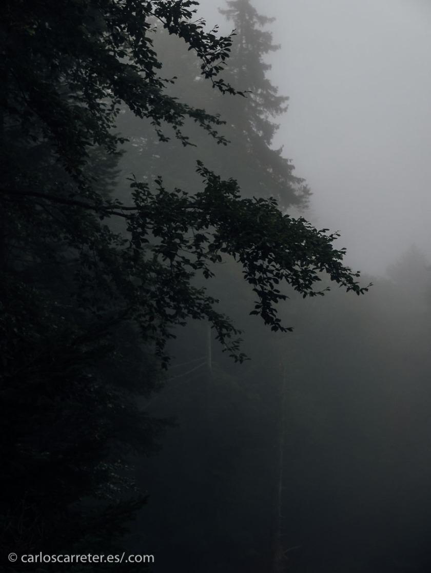 A falta de fotografías de esos bosques de esos lugares, nos conformaremos con los de las laderas del monte Pilatus en Suiza.