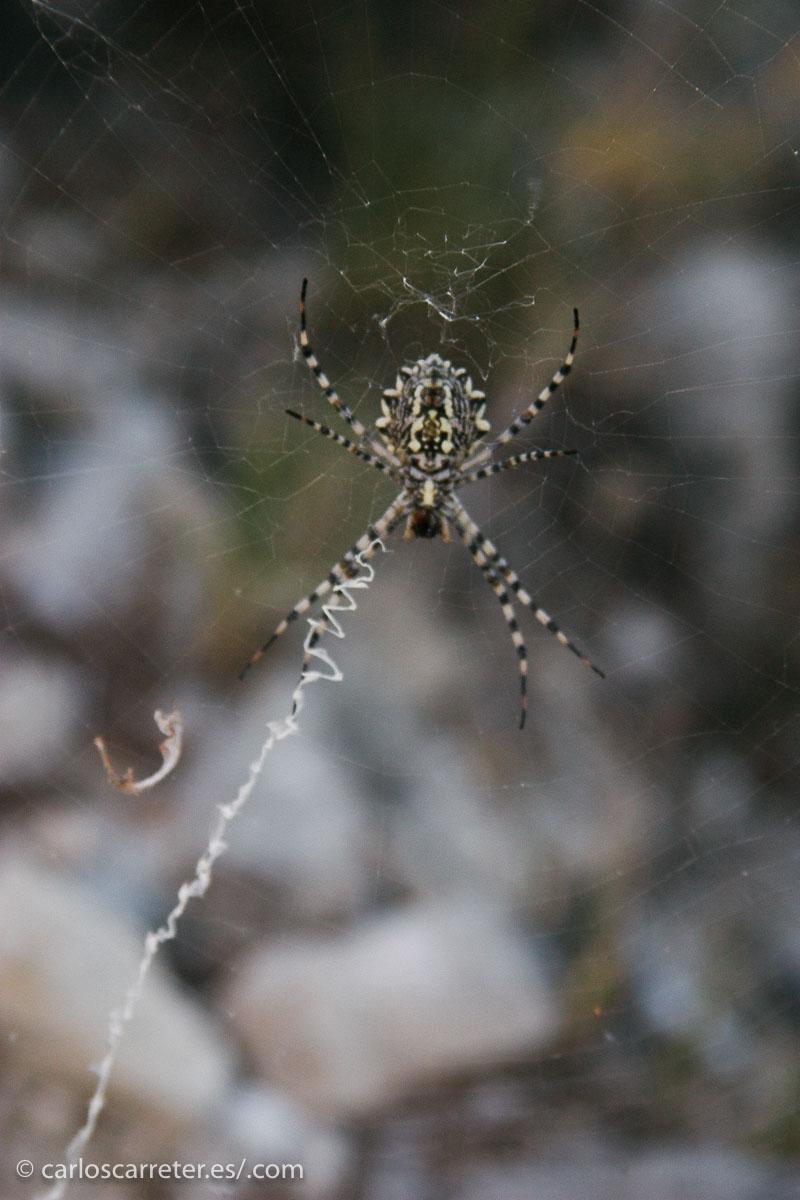 Como en otras entradas televisivas, algunas de las últimas apariciones en mi tumblr viajero, como el paisaje de la Plana de Zaragoza en la cabecera, o esta araña de la sierra de Alcubierre.