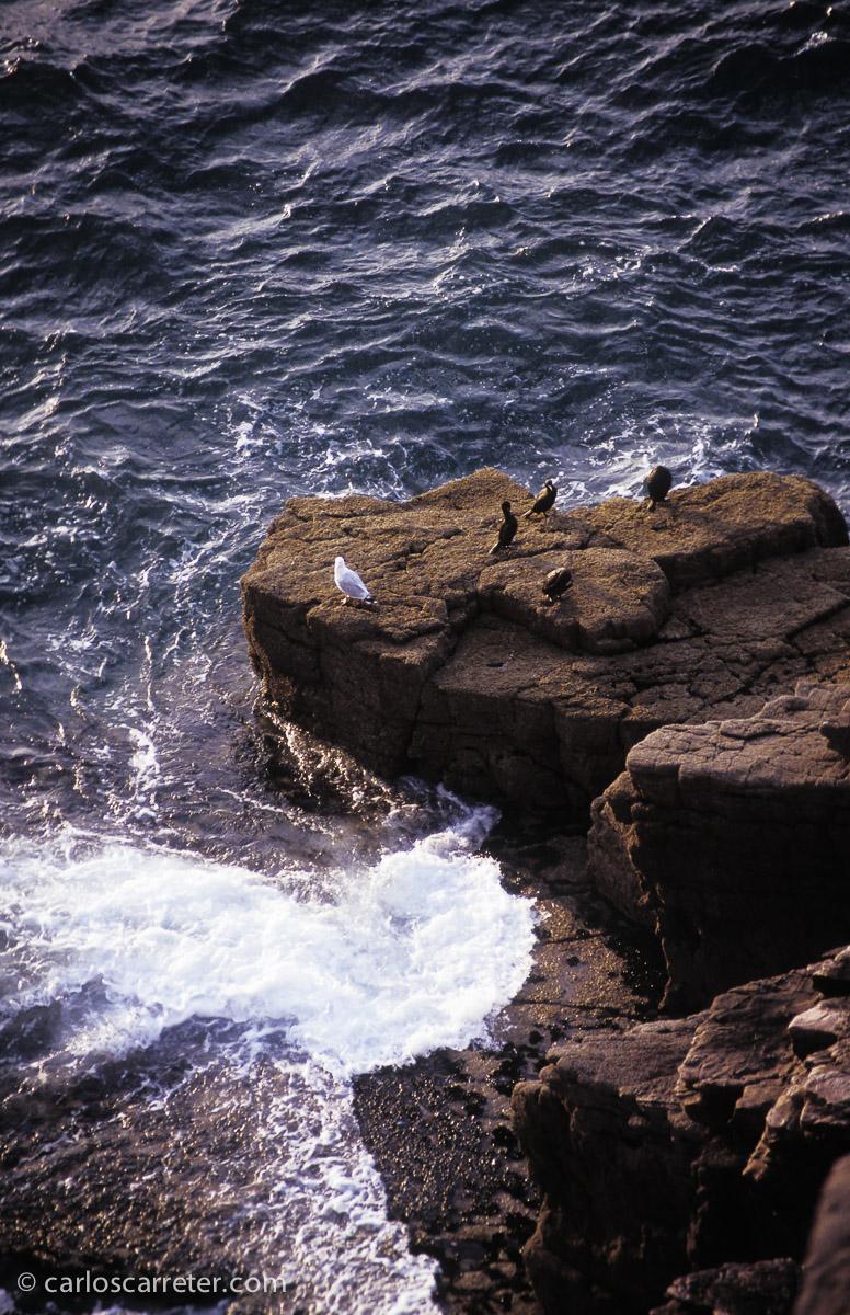 La aldea gala, según los mapas que aparecen en los álbumes, está en el Finistère bretón. Desde luego, al oeste de Cap Frehel (en esta foto), o de la Costa de Granito Rosa (en el encabezamiento de la entrada).