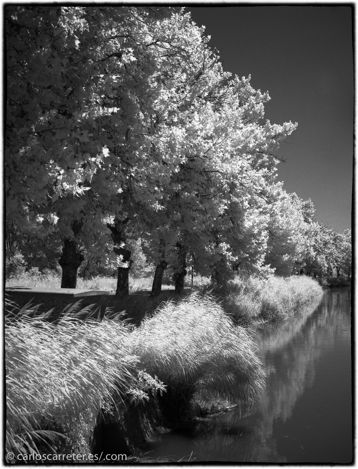 20170719-SuperP200IR+Rodinal1.50_003