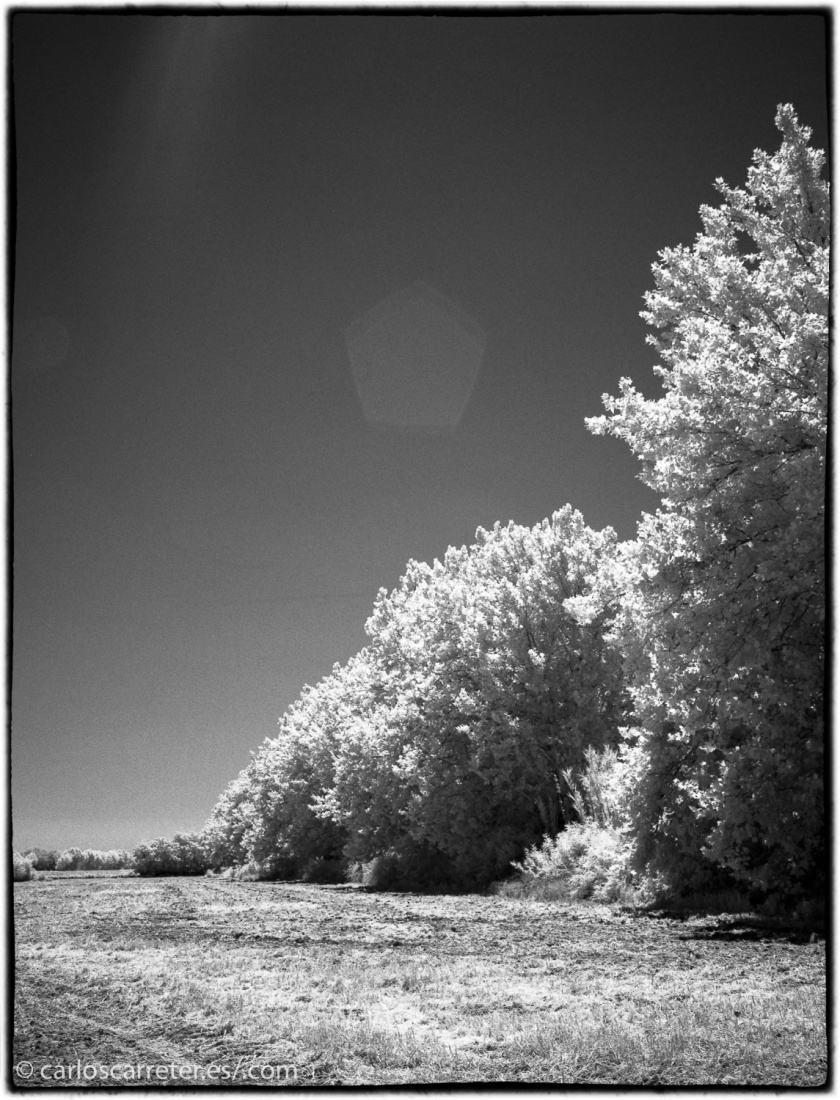 20170719-SuperP200IR+Rodinal1.50_016