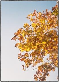 20171226-Kodak Portra 400 3-2