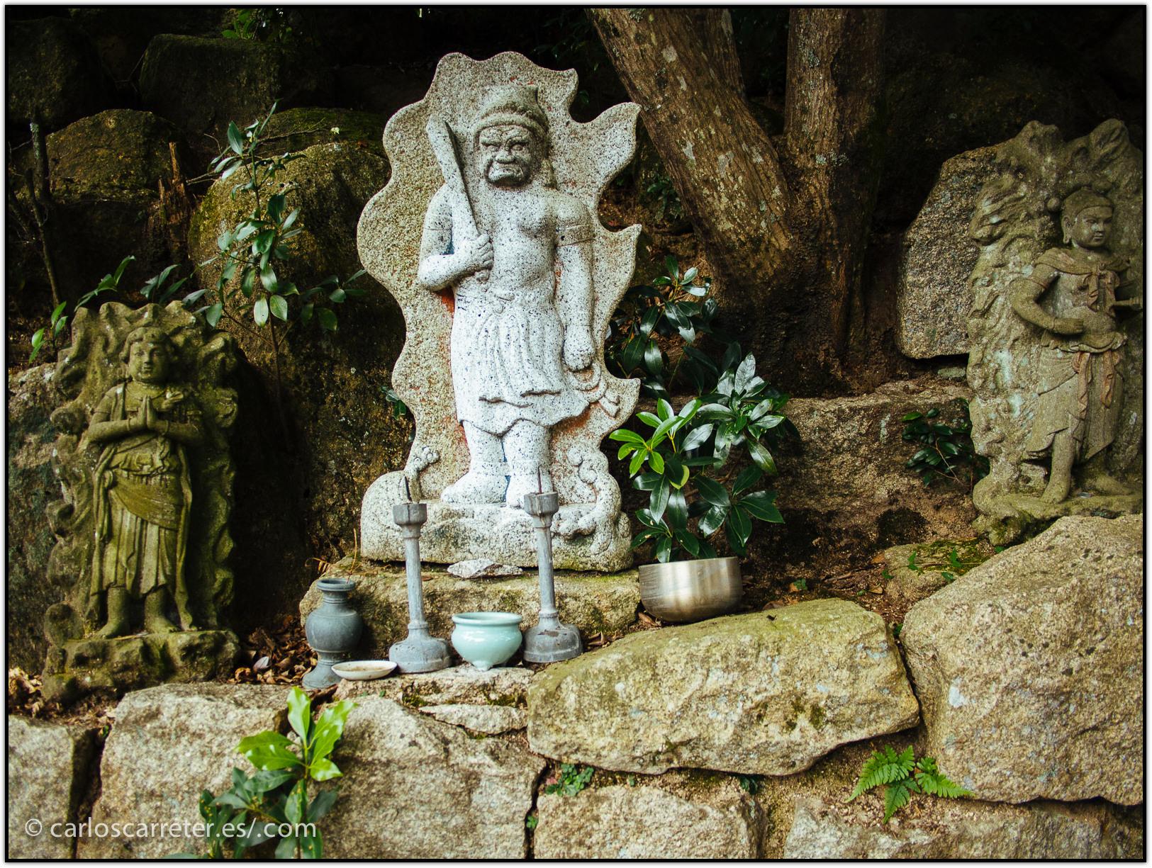 en-el-bosque-primario-del-monte-misen---miyajima_15588067819_o.jpg